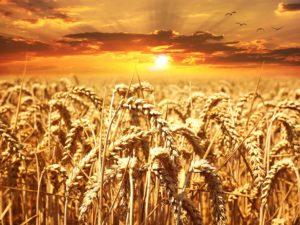 A Grain Free Diet ?